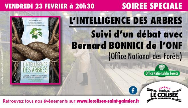Photo du film L'Intelligence des Arbres